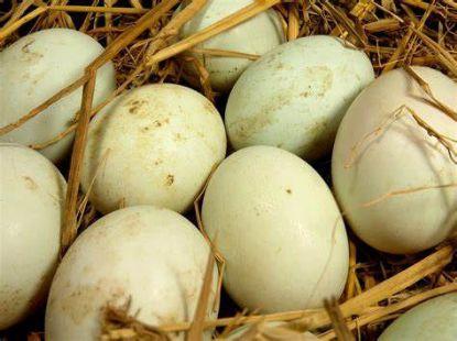Picture of Eggs, Farm Fresh, Duck, 12